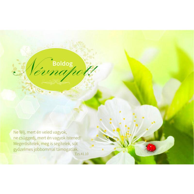 képeslap - Extra Névnap 07(10db)